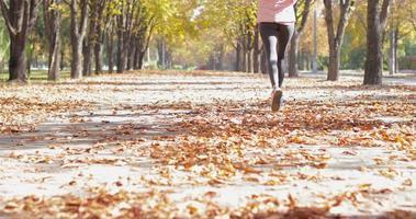 mujer correr parque joven activo fitness mujer corredor ejercicio deporte al aire libre niña trotar otoño hojas amarillas árbol