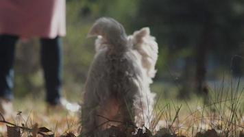 garota desconhecida brincando com um cachorro. um cachorro de tamanho médio