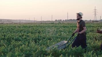 giovani agricoltori hipster con raccolto video