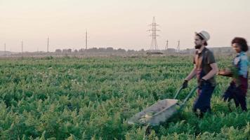giovani agricoltori hipster che trasportano il raccolto a casa video