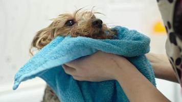 asciugare un cane video