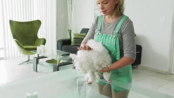 Hundebesitzer inspiziert Mundzahnhygiene von Haustierzähnen video