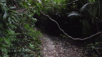 caminando por la jungla