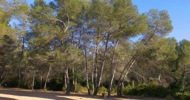 tarragona puente del diablo pine park 4k
