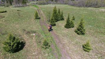 Luftaufnahme von Menschen, die im Wald gehen