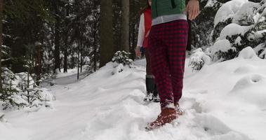 Gruppe von Menschen Winter Schneewald spazieren lächelnde Freunde sprechen Weg in schneebedeckten Park video