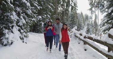 grupo de personas, invierno, nieve, bosque, caminar, sonriente, amigos, utilizar, teléfono inteligente, mensajes de texto, internet, en, parque nevado video