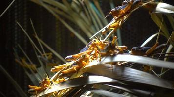 gafanhotos e vegetação