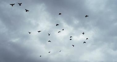 zwerm vogels in de sombere lucht