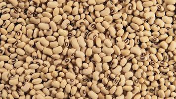 White beans (Rotation) video