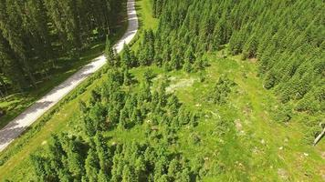 câmera panorâmica da floresta pokljuka video