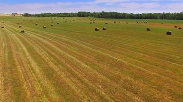 molte balle di fieno rotonde in un vasto campo agricolo