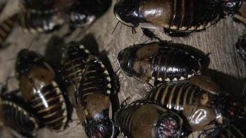baratas ou insetos semelhantes video