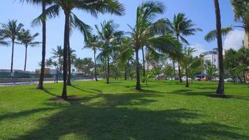 miami beach palmeras para siempre video