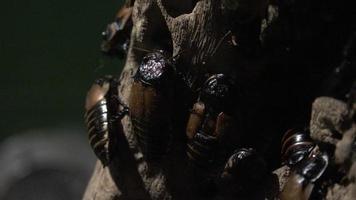 baratas ou insetos semelhantes