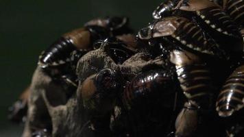 cucarachas o insectos similares