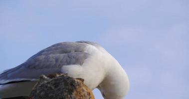 gaivota em dia ensolarado de malaga vista de perto 4k