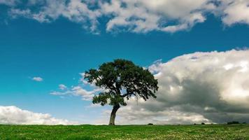 soffici nuvole sopra l'albero solitario sul campo verde video