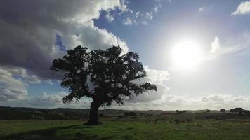 Roble solitario en una pradera de invierno video