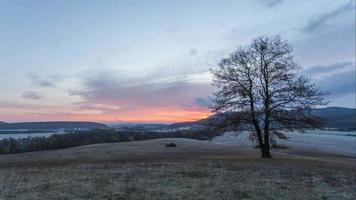 alleiniger Baum auf Wiese bei Sonnenuntergang mit Sonne, Zeitraffer