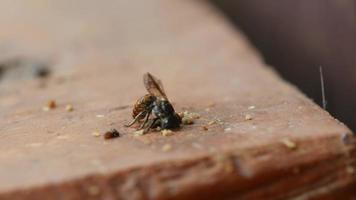 bijen die een gat in hout boren