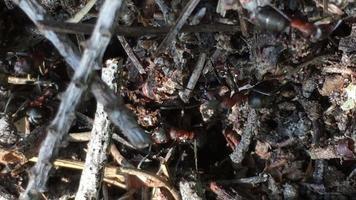 hormigas en un hormiguero