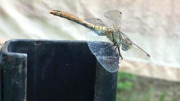 Dragonfly withstand strong winds video