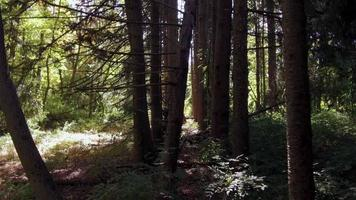 caminho cinematográfico de caminhada na floresta 4k