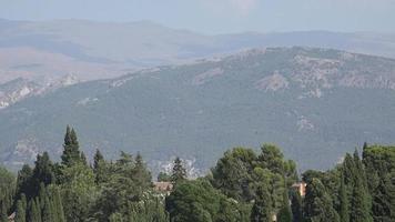 árboles forestales y montañas video