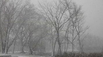 parque público durante tempestade de neve video