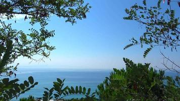 vista mare con rami di alberi e foglie verdi video