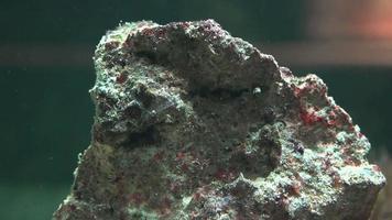rocha ou pedra ou mineral