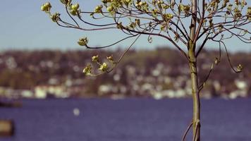 cerca del árbol mirando el lago video