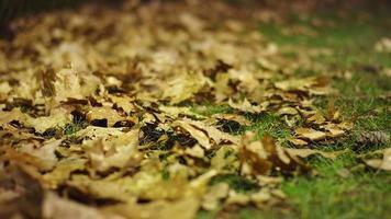 foco de rack de folhas caídas no chão