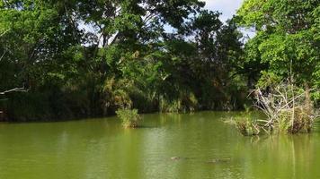 usa journée d'été floride célèbre étang de ferme d'alligator 4k