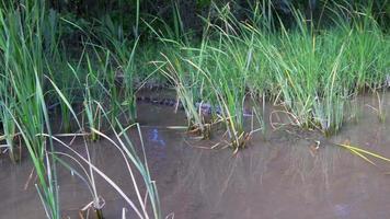USA journée d'été ferme alligator vie sauvage promenade en bateau 4k Floride