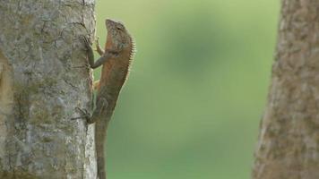 lagarto indo embora após o banho de sol