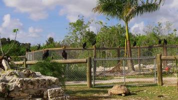 usa journée d'été floride alligator farm oiseaux et tortues 4k