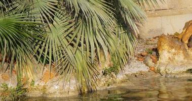 acqua di fontana di giorno pieno di sole parc de la ciutadella close up 4k spagna