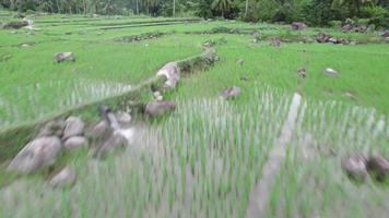 Sumatra settentrionale - fiume Asahan video