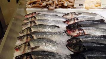 variedade de peixes em exposição no supermercado 4k