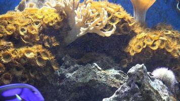 corallo in acquario video