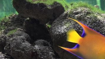 koraller och fiskar i akvariet video
