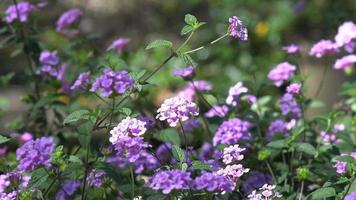 Fleurs, jardin, flore, sauvage, plantes, vert, nature, naturel,