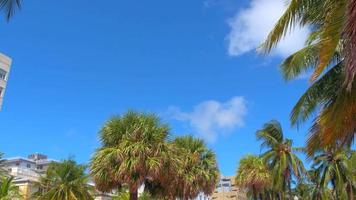 palmeiras tropicais video