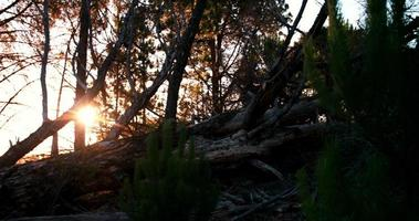Cámara panorámica sobre el tronco de un árbol caído en el bosque