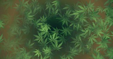 foglie di canapa verde