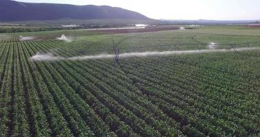 Vista aérea de los campos de maíz que se riegan con un sistema de pivote central