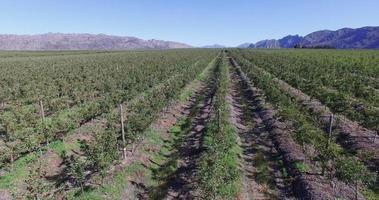 vista aérea de fruticultura intensiva