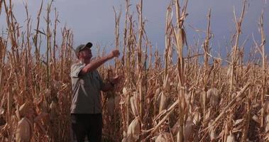 Granjero inspeccionando cultivos de maíz devastados por la sequía